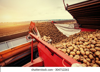 A pile of potatoes on a trailer with vintage tractor