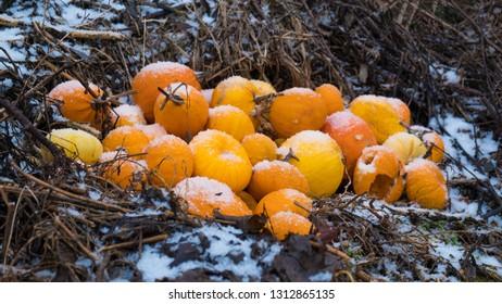 Pile of pumpkings in the snow