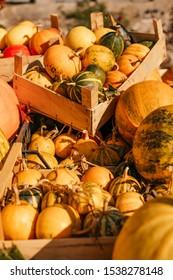 A pile of pumpkins at a fall farmers market.