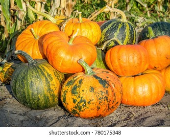 Pile of pumpkins illuminated by the evening sun in autumn.