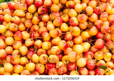 A pile of rainier cherries are organically grown. They are a symbol of Washington summers. Background.