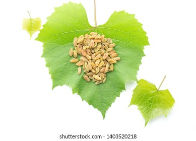 A pile of raisins or sultanas on green fresh grape leaves isolated on white background,three fresh leaves ,top view studio shot