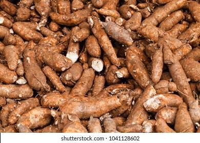 pile of raw cassava in cassava industry.