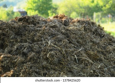 Pile of raw cow manure on the farmyard. Close up of pile of manure in the countryside. Detail of heap of dung in field on the farm yard. Village background. Traditional rural scene