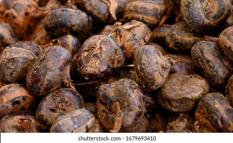pile of raw water chestnut dogged from soil in a market
