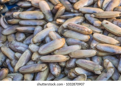 Pile of Razor Clams aka Knife jacked clam sold at local fish market. Sword Razor Bivalve Shell Mollusk of the PHARIDAE family found in coast of Petchaburi province in Thailand. Thai dishes ingredient