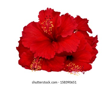 Pile of Red Hibiscus Flowers on white background