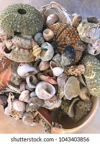 Pile of seashell collection