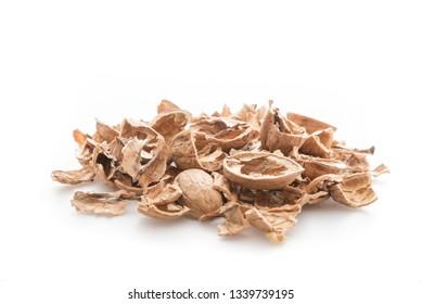 Pile of shells nutshells
