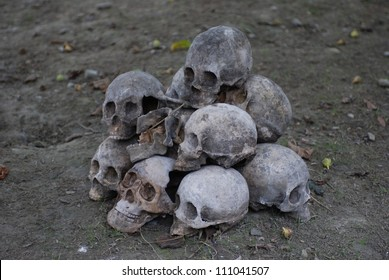 pile of skull on the ground.