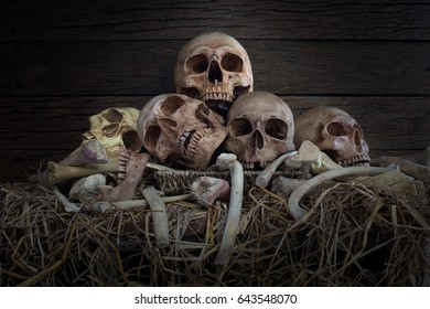 Pile of skulls and pile of bone put on the straw in scary dim light in the barn / Still life style and select focus