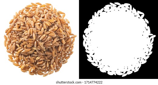 Pile of spelt, farro or einkorn hulled wheat, isolated, top view