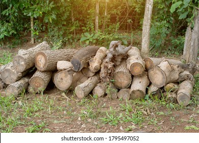 A pile of stacked firewood, prepared for heating the house. Firewood harvested for heating in winter. Chopped firewood on a stack. Firewood stacked and prepared for winter Pile of wood logs