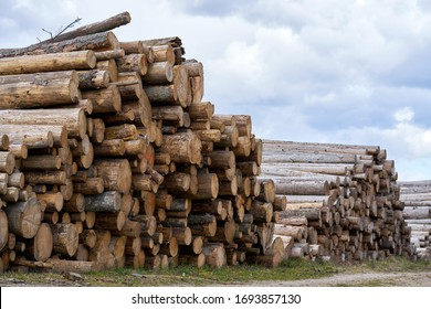 pile stacked natural sawn wooden logs background, top view.