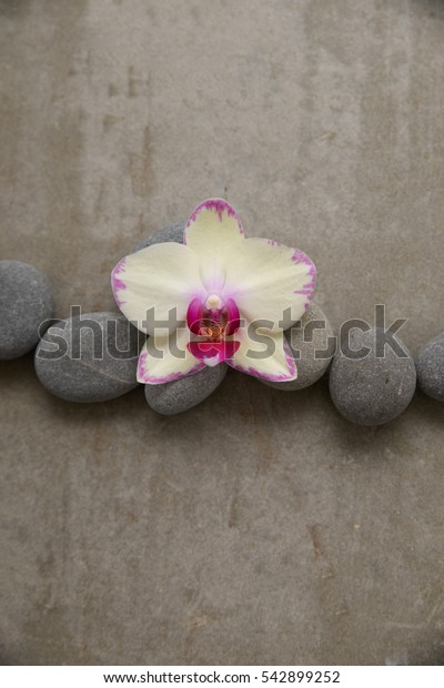 Pile of stone with orchid on grey background.