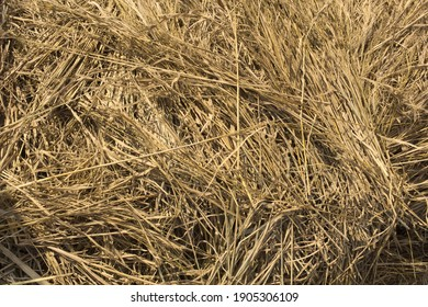 a pile of straw scattered irregularly, used as a background