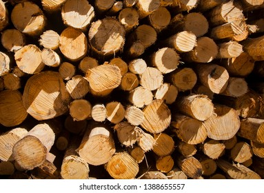 Pile of timber, Partially processed trees stripped of bark and branches stacked ready for transportation to a sawmill to be made into wooden lumber products.
