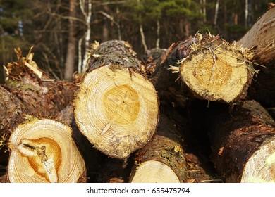 A pile of tree boles lays at an edge of a forest near Schneverdingen (Germany, Lower Saxony, County Heidekreis).