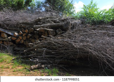 Pile of tree branches cut in natural environment.