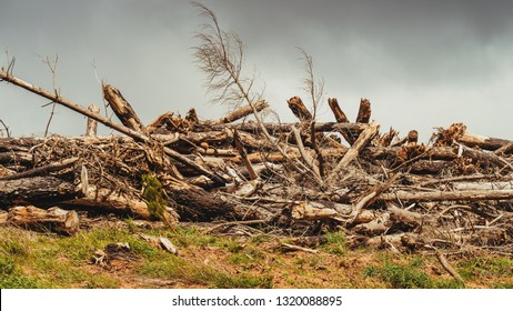 Pile of trees destroyed by hurricane in Adelaide Hills, South Australia