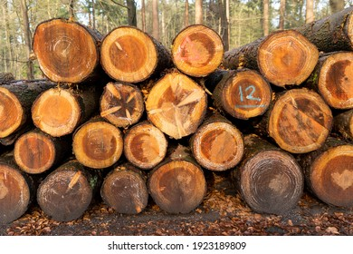 A pile of treestumps in the forest