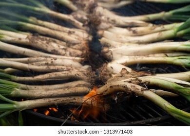 A pile of calçots, typical catalan sweet onions, being roasted on the barbecue. Typical catalan dish.