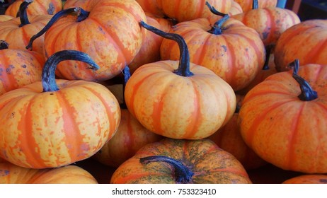 Pile of unusual orange and gold striped pumpkins with curvy dark stems