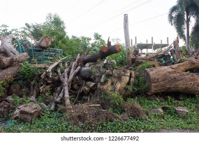 Pile of wastage tree trunk in abandoned land.