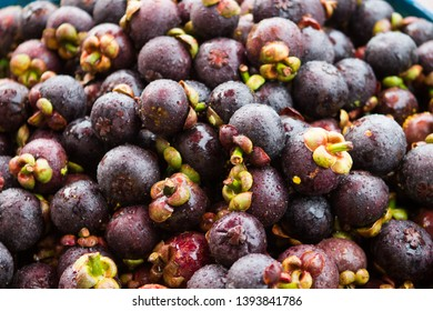 Pile of wet mangosteen. Mangosteen or purple mangosteen is a tropical evergreen tree with edible fruit native to Island Southeast Asia.
