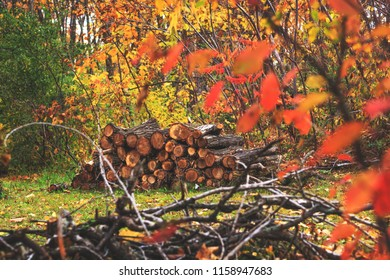 Pile of wood in autumn forest landscape. Heap of cut and stacked woods. A pair of piled up logs ready to take away for the winter season. Oak forest at the fall time. Old firewood background.