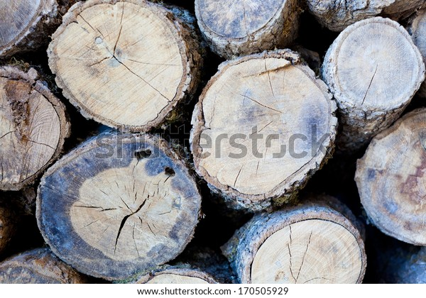 pile of wood logs, closeup view