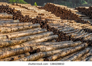 Pile Of Wood Logs With Forest