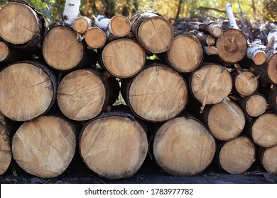 Pile of wood logs on edge of forest. Wooden Logs with Forest on Background. Trunks of trees cut and stacked in the foreground. Stacked Firewood. Log trunks pile, logging timber wood industry. firewood