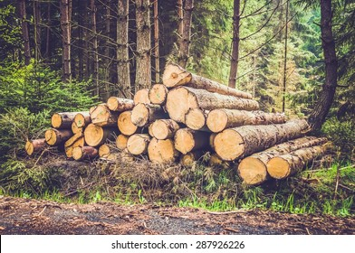 Pile of wood logs on the edge of the forest - retro and vintage style
