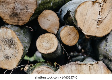 Pile of wood logs ready for winter
