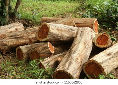 Pile of wood logs, Siamese or Thailand rosewood