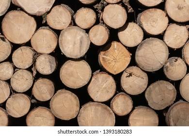 Pile of wood logs. Tree stumps backround. Tree stumps backround
