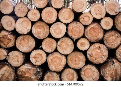 Pile of woods texture, wall of tree trunks