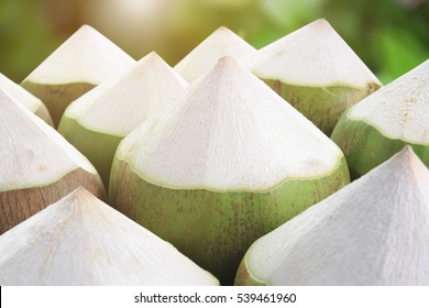 pile young coconut for drink or fresh coconut milk on garden with sunlight background, refreshing