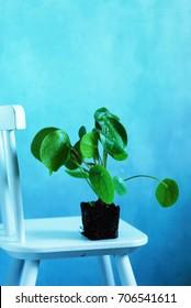 Pilea Plant Doodle