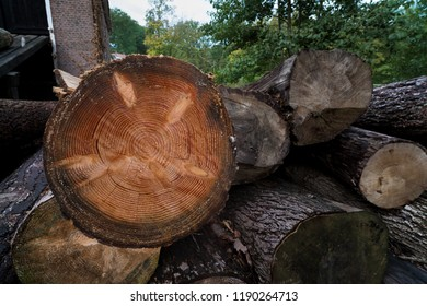 piled up trees in front of a sawmill