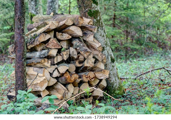 Piles of firewood in the forest, but this energy source is also not climate-friendly, since deforestation can produce twice as much CO2 as fossil fuels.