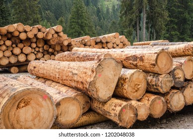 Piles of Logs  along a Mountain Road
