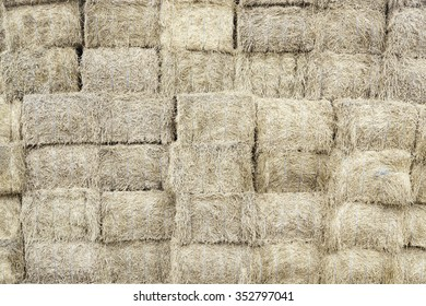 Piles of straw, detail of piled straw for animal feed