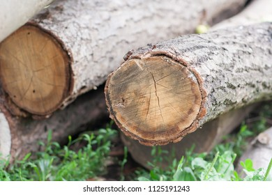 piles of timber ready to industry