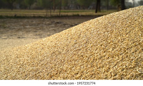 Piles of wheat straw for animals fodder use. Mountain fodder straw use for animal feeding.