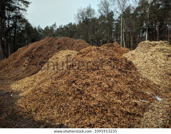 piles of wood chips at forest edge