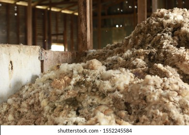 piles of wool piled up on the floors of an old traditional hard wood shearing shed waiting to be baled for the family farm, rural Victoria, Australia
