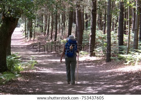 Pilgrim walking to Compostela on the french Way of St James (Camino de Santiago), crossing a forest near Portomarin, Galicia, Spain