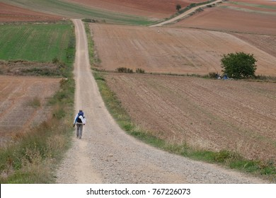 pilgrims walking by the path through multicolored fields, natural idyll, countryside landscape, Camino de Santiago, Spain, French way